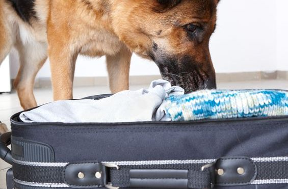 International and Cross-Border Moving with Pets